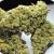 Jack-Herer-Marijuana-Strain